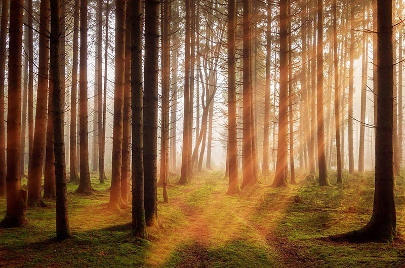 forest with sun filtering through trees
